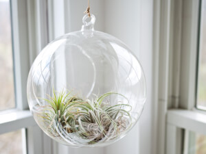 Terrarium Making Ideas