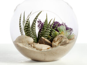 Terrarium Plants Classbento