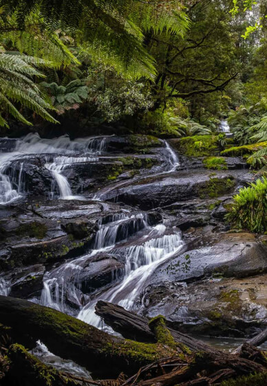 3-day Photography Tour: Otway Ranges, Vic