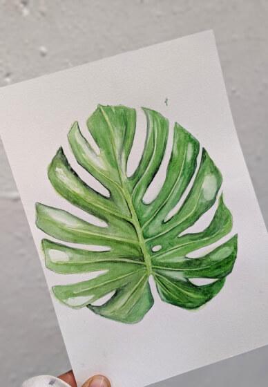 Botanical Illustration Class