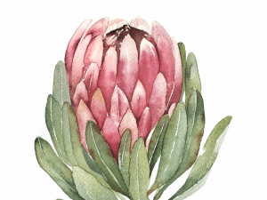 Botanical Watercolour Workshop