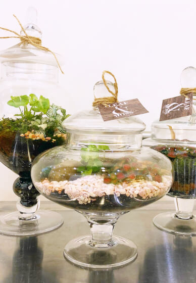 Closed Terrarium Workshop