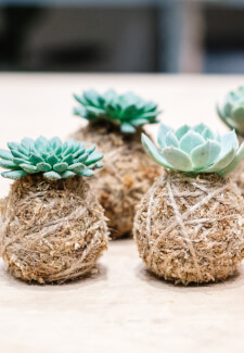 Kokedama Workshop at Bondi Beach