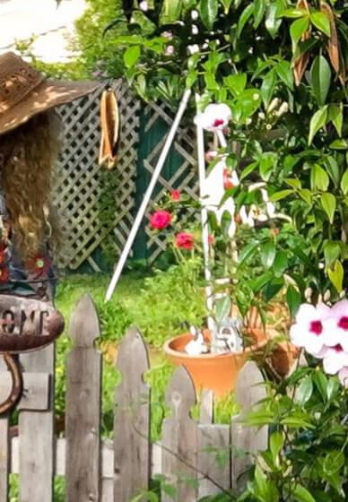 Magickal Herb and Plant Garden Class