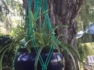 Make a Macrame Plant Hanger Workshop