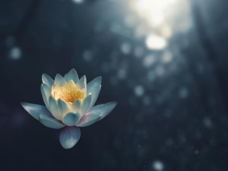 Meditation for Love with Deeksha