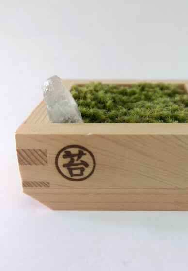 Mini Moss Garden Workshop