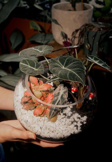 Private Terrarium Workshop for Two