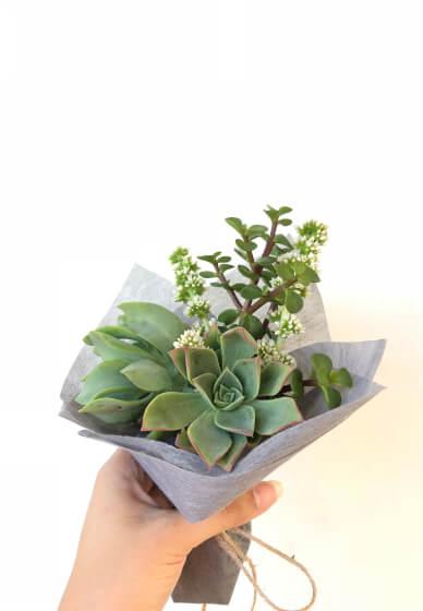 Succulent Petite Posy Arrangement Workshop