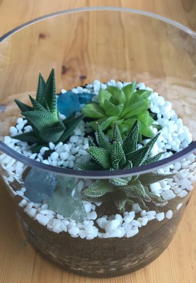 Succulent Terrarium Making Class
