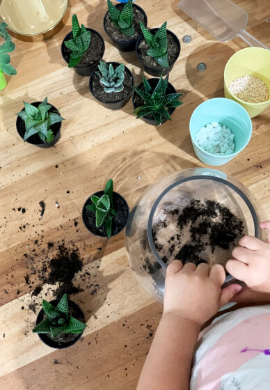 Succulent Terrarium Workshop for Kids (7-14 Years)