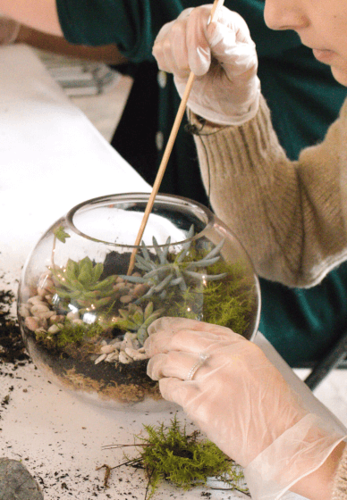 Terrarium Workshop for Beginners