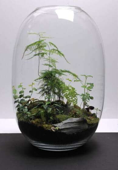 Tropical Terrarium Workshop and Tanqueray