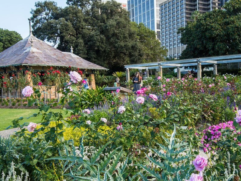 Rose Garden and Pavilion at Royal Botanic Gardens Sydney