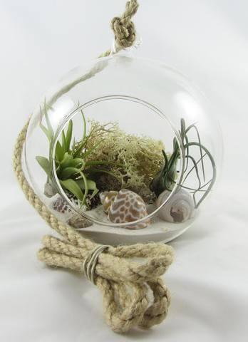 Open succulent terrarium Sydney